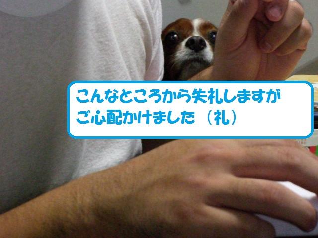 2012秋の信州 もみじ・星まつりの旅 178
