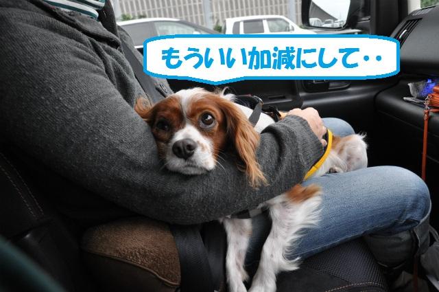 車中泊・相生編 003