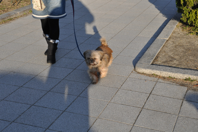 2013,02,16 大阪城公園 052