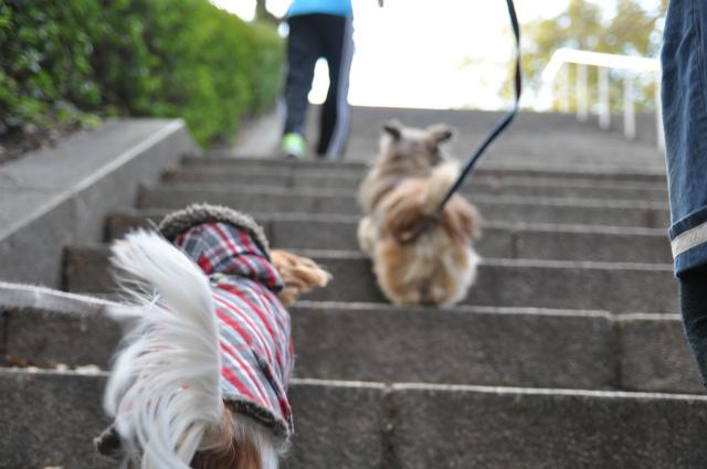 2013,02,16 大阪城公園 031