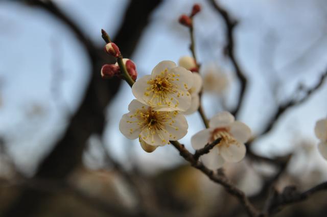 2013,02,16 大阪城公園 065
