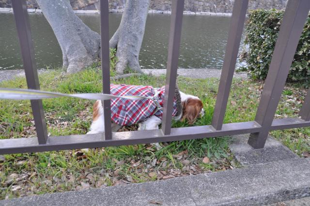 2013,02,16 大阪城公園 074