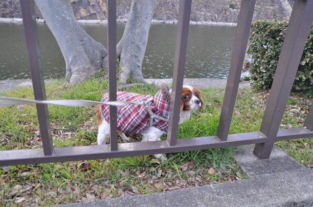 2013,02,16 大阪城公園 075