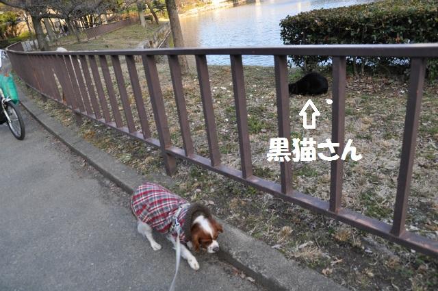 2013,02,16 大阪城公園 088