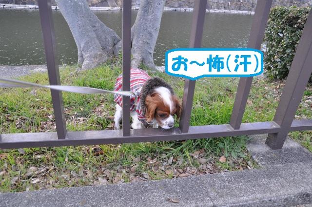 2013,02,16 大阪城公園 076