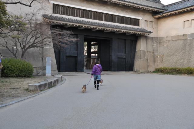 2013,02,16 大阪城公園 103