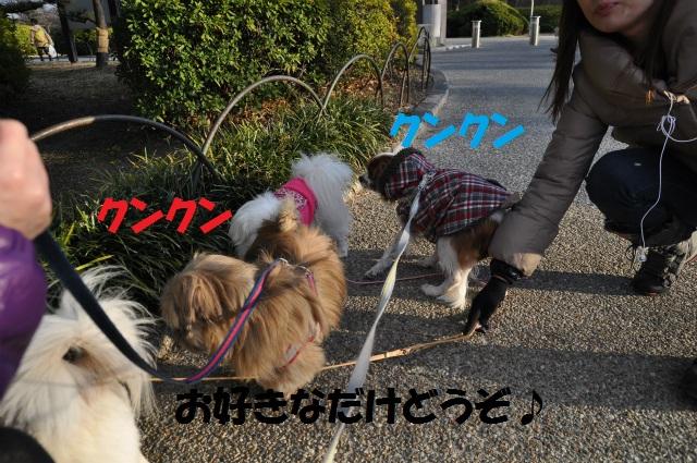 2013,02,16 大阪城公園 054