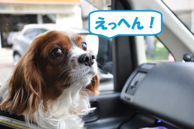 2013,02,23奥琵琶湖・敦賀 005