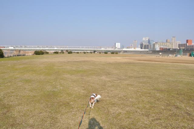 2013,03,06 淀川河川敷 026