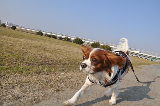 2013,03,06 淀川河川敷 046
