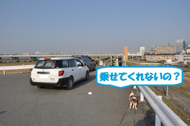 2013,03,06 淀川河川敷 066