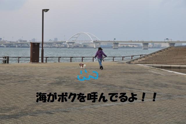 2013,03,02 初グルーミング・初散歩 138
