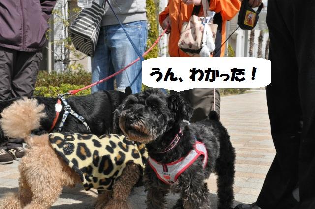 2013,03,17 ハッピーちゃんといつものメンバー 067
