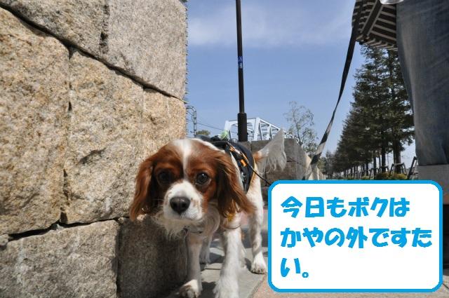 2013,03,17 ハッピーちゃんといつものメンバー 032