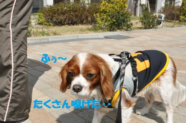 2013,03,17 ハッピーちゃんといつものメンバー 060