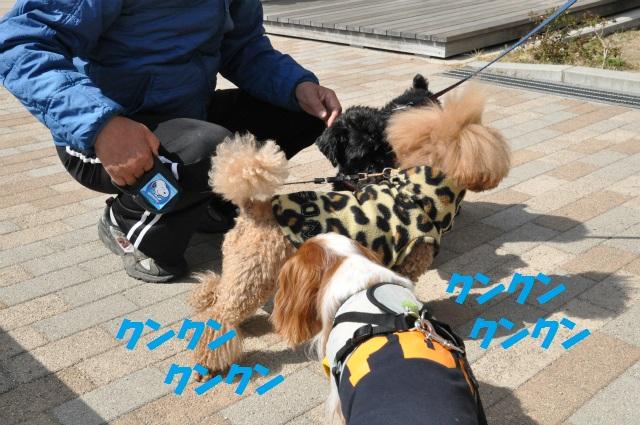 2013,03,17 ハッピーちゃんといつものメンバー 054