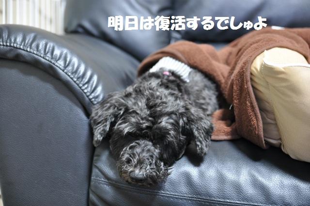 2013,03,18 あずきちゃん手術の日 004