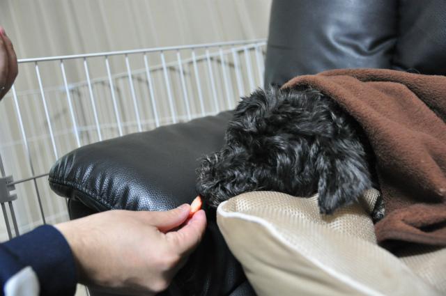2013,03,18 あずきちゃん手術の日 081