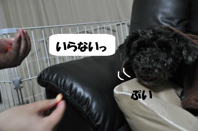 2013,03,18 あずきちゃん手術の日 082