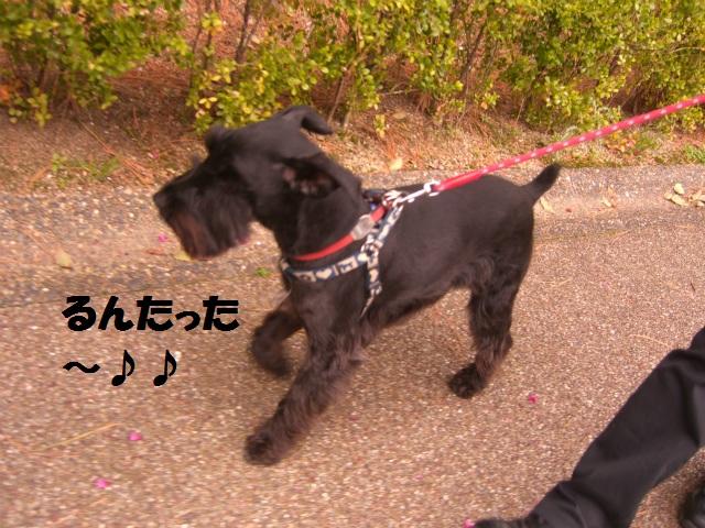 2013,03,23 ハッピーちゃんとお散歩 010