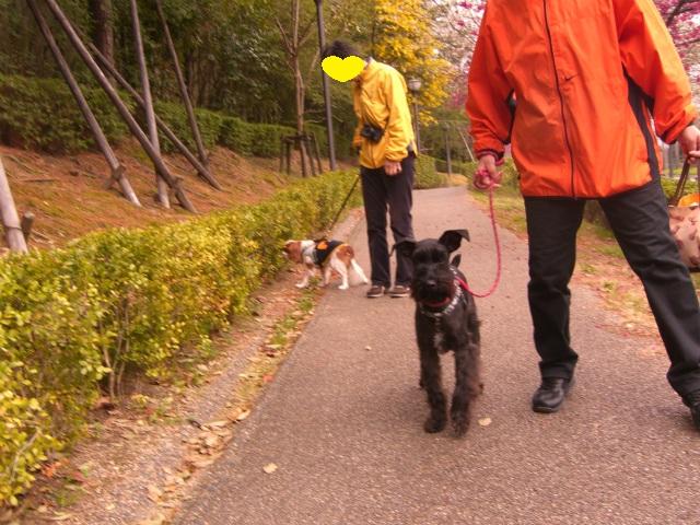 2013,03,23 ハッピーちゃんとお散歩 011