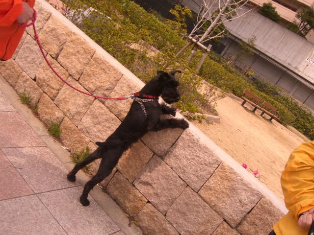 2013,03,23 ハッピーちゃんとお散歩 035