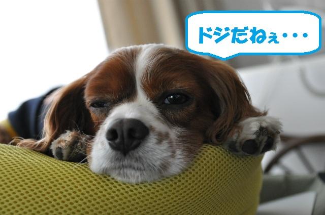 2013,03,20 天保山登頂 003