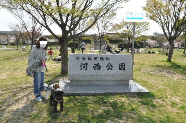 2013,03,30和歌山花見 079