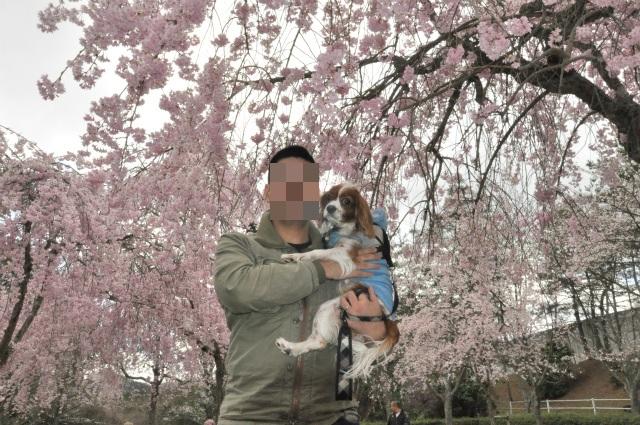 2013,04,08 桜前線北上中 022