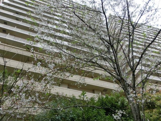 2013,04,08 桜前線北上中 029
