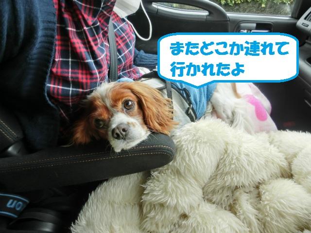 2013,04,08 桜前線北上中 049