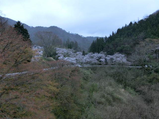 2013,04,08 桜前線北上中 050