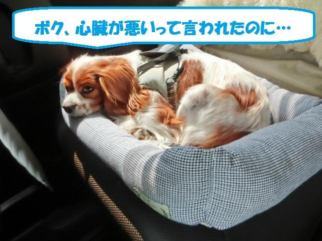 2013,04,30 あいとう・キャバぷちオフ会 003