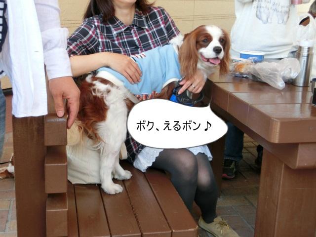 2013,04,30 あいとう・キャバぷちオフ会 021