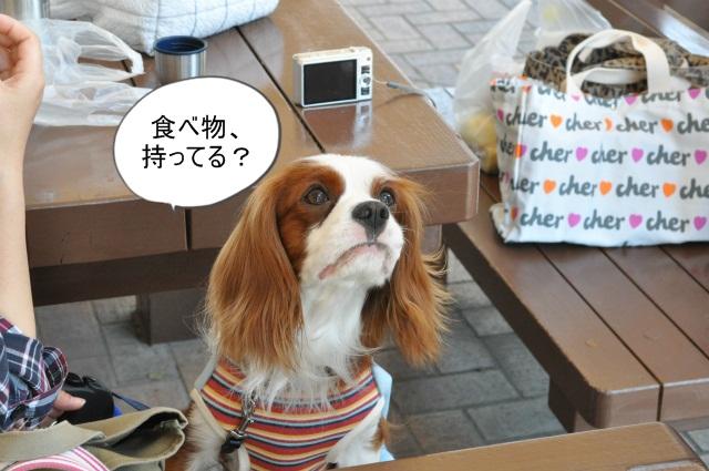 2013,04,30 あいとう・キャバぷちオフ会 155