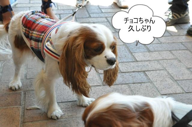 2013,04,30 あいとう・キャバぷちオフ会 161