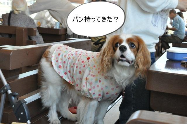 2013,04,30 あいとう・キャバぷちオフ会 160