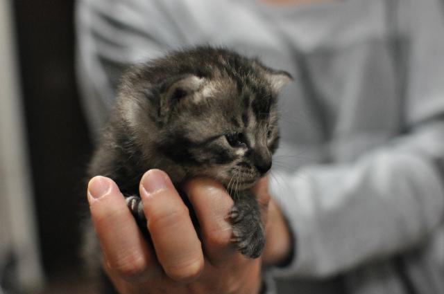 2013,05,12 子猫を拾った日 008