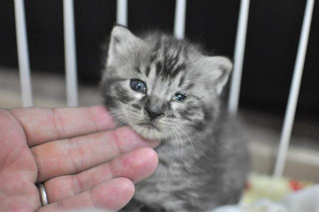 2013,05,12 子猫を拾った日 060