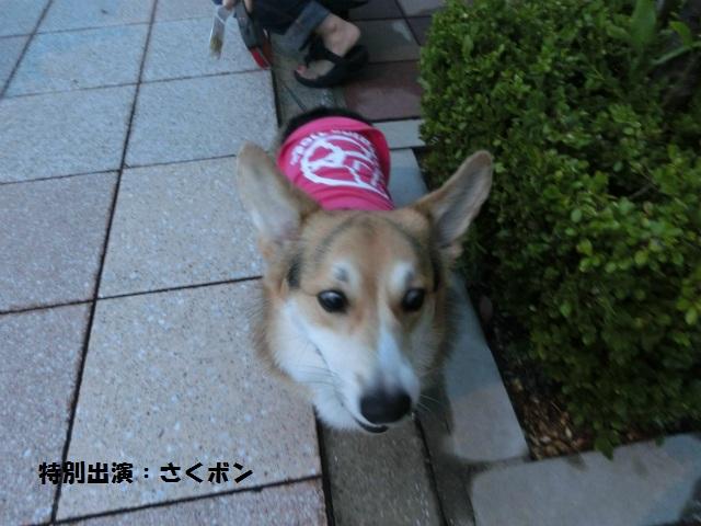 2013,07,06 思いつき和歌山の旅 003