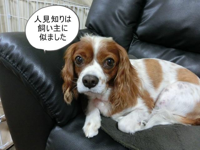 2013,07,06 思いつき和歌山の旅 006