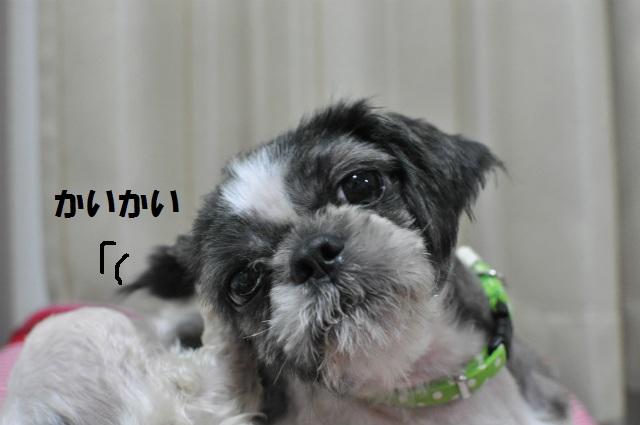 2013,07,09 小梅太夫でしゅ 013