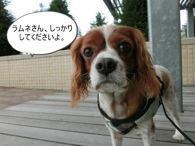 いい天気♪てんきてんき丹後 014