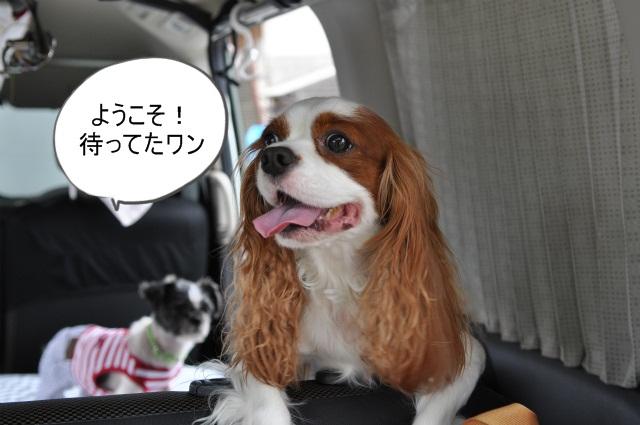 2013,07,14 浜坂花火大会 009