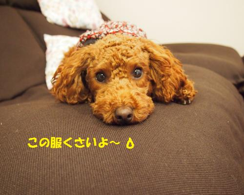 001_convert_20121123094930.jpg
