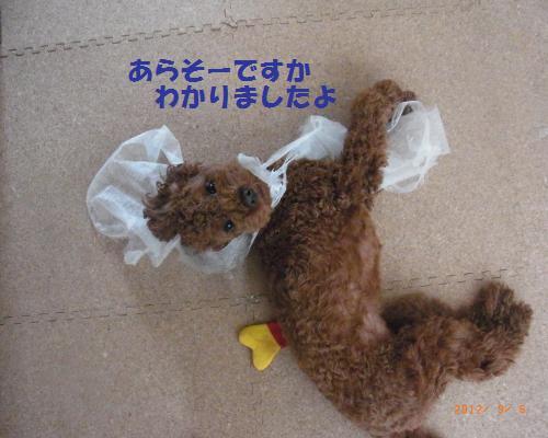 004_convert_20120908092434.jpg