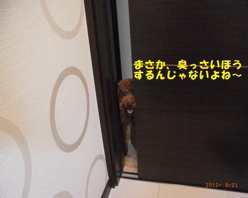 006_convert_20120923124455.jpg