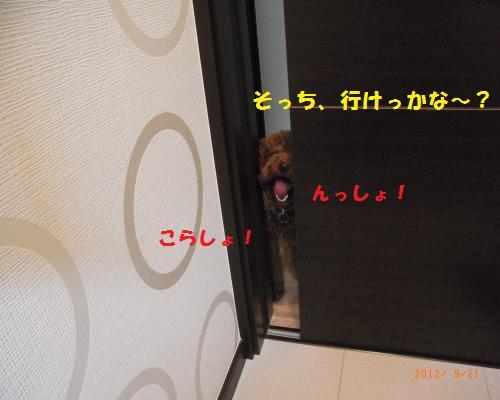 007_convert_20120923124532.jpg
