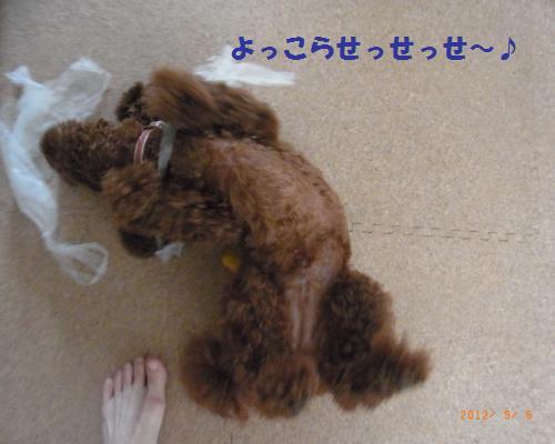 008_convert_20120908092542.jpg