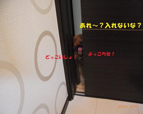 008_convert_20120923124558.jpg